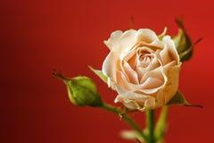 Fond de cadre de source avec la fleur rose Fond floral Foyer sélectif Place pour le texte Photographie stock