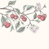 Fond de cerise de vintage illustration de vecteur