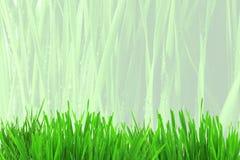 Fond de champ d'herbe Image stock