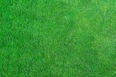 Fond de champ d'herbe verte, herbe fraîche Photos stock