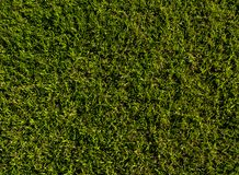 Fond de champ d'herbe verte, texture, modèle Nourriture, cour photos libres de droits