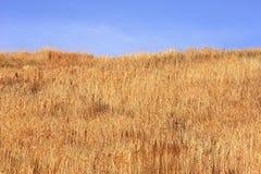 Fond de champ sec Image libre de droits
