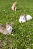 Fond de chats sur l'herbe verte Photos libres de droits