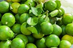 Fond de chaux, chaux fraîches vertes Photographie stock libre de droits