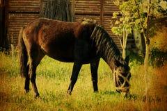 Fond de cheval de vintage Photos libres de droits