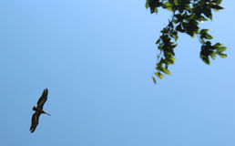 Fond de ciel avec l'oiseau Photos libres de droits