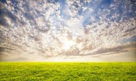 Fond de ciel d'herbe verte et de coucher du soleil Photographie stock libre de droits
