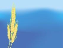 Fond de ciel d'oreilles de blé Image stock