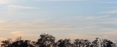 Fond de ciel et d'arbres au temps de coucher du soleil, crépuscule Images libres de droits