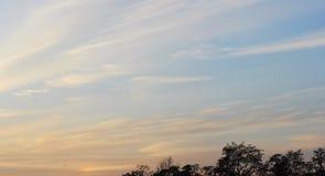 Fond de ciel et d'arbres au temps de coucher du soleil, crépuscule Photographie stock