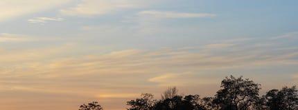 Fond de ciel et d'arbres au temps de coucher du soleil, crépuscule Photos libres de droits