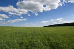 Fond de ciel nuageux et d'herbe Photo stock