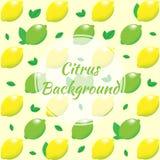 Fond de citron Citron et chaux avec des feuilles Images stock