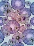 Fond de collage de style de vintage, modèle coloré sans couture pour l'album, modèle de batik avec des bourgeon floraux de pomme  illustration de vecteur