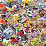 Fond de collage de fleur Photos stock