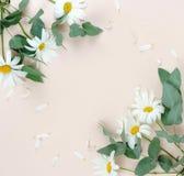 Fond de composition en fleurs bouquet des camomiles de fleurs sur le fond beige pâle photos libres de droits