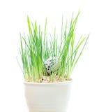 Fond de concept de Pâques Oeufs dans l'herbe verte Images stock