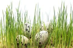 Fond de concept de Pâques Oeufs dans l'herbe verte Photo stock