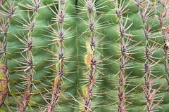 Fond de configuration de cactus images stock