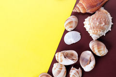 Fond de coquille de mer photo libre de droits