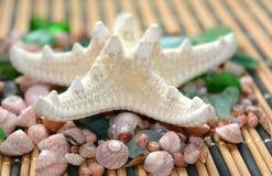 Fond de coquilles et d'étoiles de mer de mer Images libres de droits