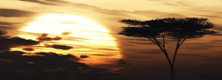 Fond de coucher du soleil d'arbre d'acacia Image libre de droits