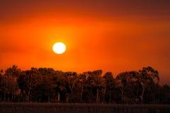 Fond de coucher du soleil de lever de soleil d'arbres de nature Photographie stock libre de droits