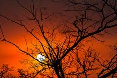 Fond de coucher du soleil de lever de soleil d'arbres de nature Images libres de droits