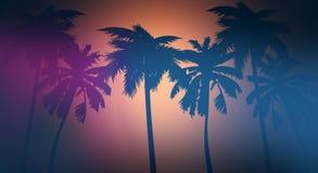 Fond de coucher du soleil, palmiers, la Floride illustration de vecteur
