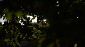 Fond de coucher du soleil par des branches d'arbre clips vidéos