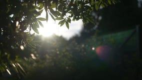 Fond de coucher du soleil par des branches d'arbre banque de vidéos