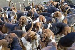 Fond de crabots de chiens de chasseur Photos stock