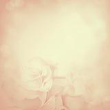 Fond de cru avec des fleurs de Rose Photographie stock libre de droits
