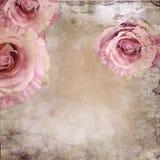 Fond de cru avec des roses photos stock