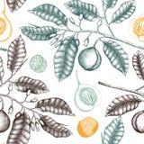 Fond de cru avec l'illustration tirée par la main d'arbre de noix de muscade Conception des installations tirée par la main d'épi illustration de vecteur