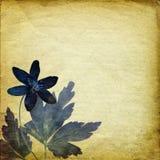 Fond de cru avec les éléments floraux Photos libres de droits