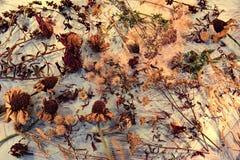 Fond de cru avec les graines, les plantes et les fleurs sèches sur la table photographie stock