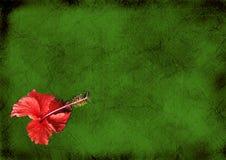 Fond de cru avec un hibiskus Images libres de droits