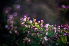 Fond de détail de nature, arbre de floraison images libres de droits
