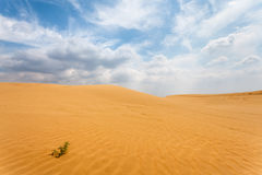 Fond de dunes de désert Photographie stock libre de droits