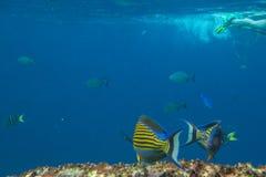 Fond de durée marine Photo libre de droits