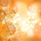 Fond de fête des feuilles d'automne de vecteur illustration de vecteur