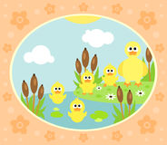 Fond de ferme avec le canard Photo stock
