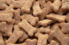 Fond de festin de chien Photos stock