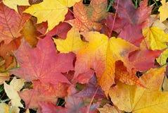Fond de feuillage d'automne Photo libre de droits