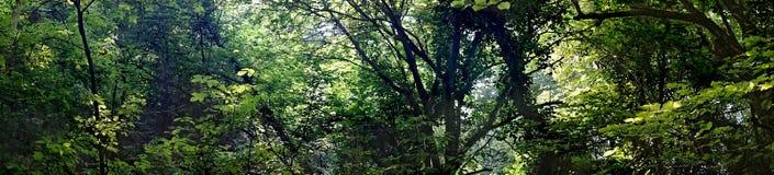 Fond de feuillage vert d'été au soleil Panorama de bureau de WallpapersWide-format pour une visualisation architectonique Un pano image libre de droits