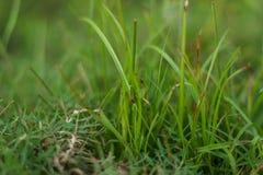 Fond de feuille d'herbe photographie stock libre de droits