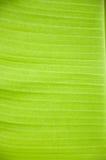 Fond de feuille de banane Photos libres de droits