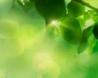 Fond de feuille de pomme de ressort Photo libre de droits