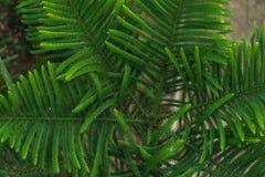 Fond de feuille verte Photos libres de droits